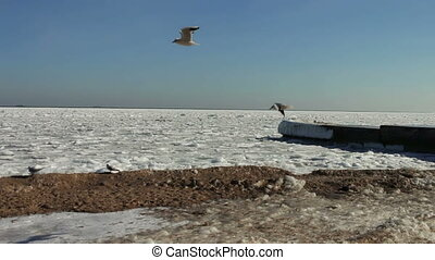 Seagulls sitting on ice-covered sea