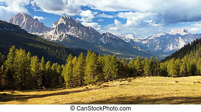 Larch wood, Le Tofane Gruppe and Hohe Gaisl, Dolomites -...