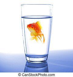 goldfish in cocktail drink glass and water showing bar flee...
