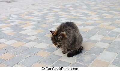 Large homeless cat wach itself - Large homeless cat wash...