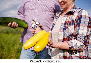 senior couple with squashes and secateurs at farm - farming,...