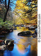 Autumn creek foliage - Autumn creek woods with yellow trees...