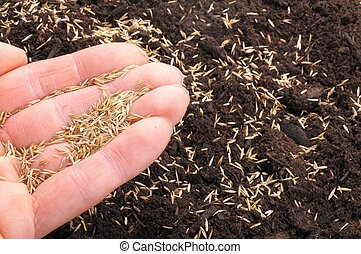 hand sowing seed on soil showing growth concept