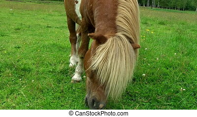 horse in meadow