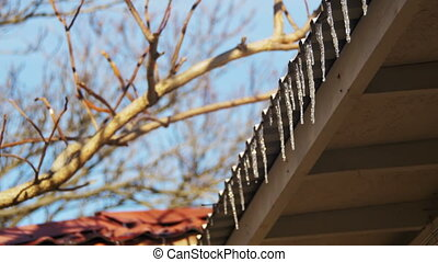 Winter Icicles Melting on the Roof Under the Spring Sun and...