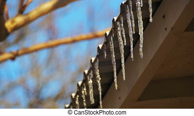 Winter Icicles Melting on the Roof Under the Spring Sun and Dripping from their Tips