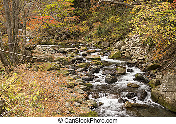 Autumn brook - Brook flowing among many stones beside fallen...