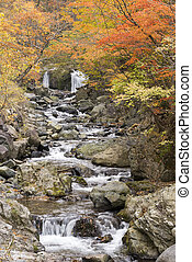 Autumn brook - Brook surrounded by autumn leaves in...