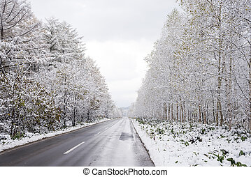 Roadside snowy trees - Roadside snowy lined autumn leaves...