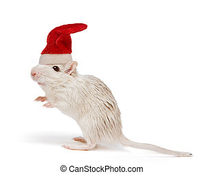 Christmas rat - Little white desert rat wearing a christmas...