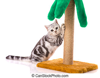 Kitten playing with toy palm isolated on white