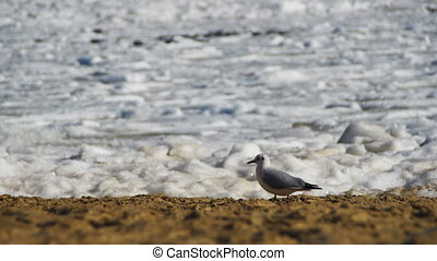 Seagull on the Seashore Frozen Ice-Covered Sea. White...