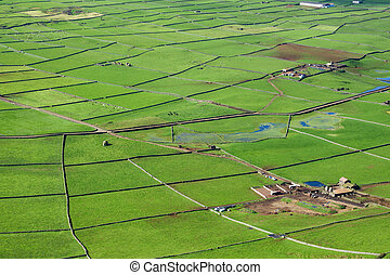 Farm fields with cows top view in the Terceira island in...