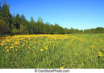 dandelions near wood