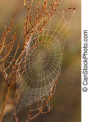 Cobweb all in dew on a beautiful morning in the meadow