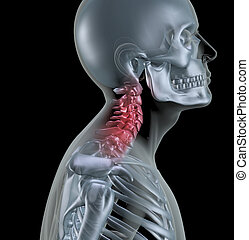 Skeleton showing neck bones - 3D render of a skeleton with...