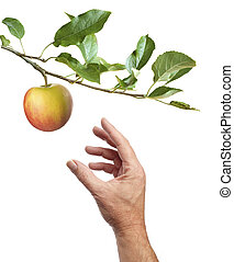 Picking an apple. White background