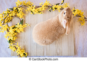 Easter bunny rabbit with yellow spring forsythia flowers