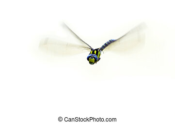 flying damsel-fly - Detail (close-up) of the flying...