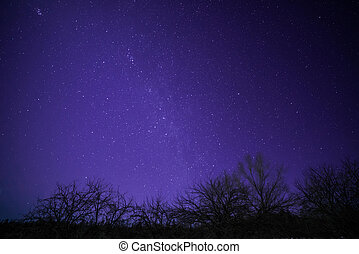 Rural Winter Landscape at night with trees and stars and...