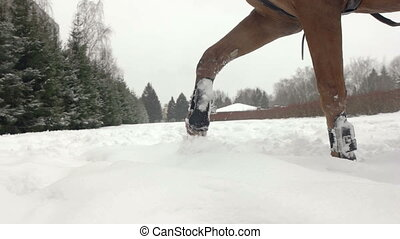 Brown horse trotting through white snowy blanket. Powerful...