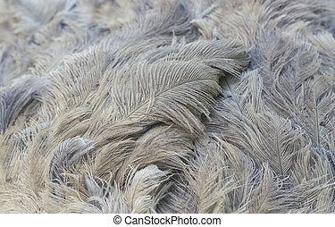 Ostrich feathers closeup. Natural background.