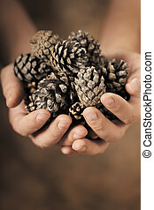 Pine Cones - Man holding dry pine cones in his hands