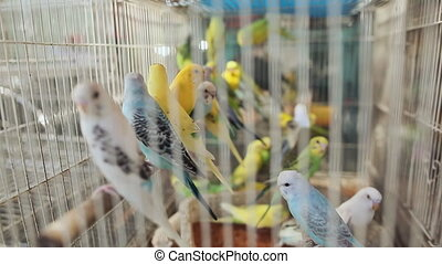 A lot of bright and colorful parrots sit in a cage.