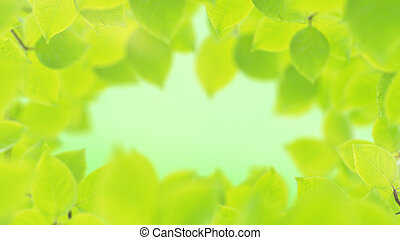 Spring background, natural frame of beautiful green leaves
