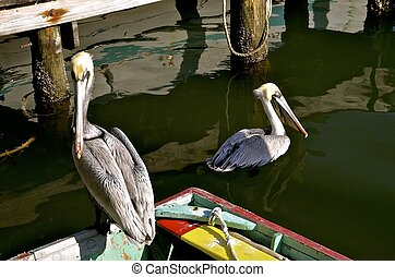 Old wooden row boat and pelicans