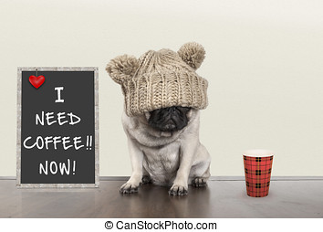 cute pug puppy dog with bad morning mood, sitting next to...