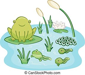 Frog Life Cycle Infancy to Adult - Cute Animal Illustration...