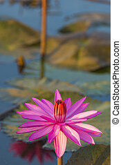 lotus vintage filter