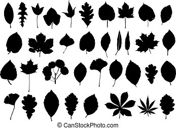 leaves silhouette - blask set of leaves isolated on white...