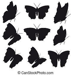 蝴蝶, 集合, 白色, 黑色, 被隔离