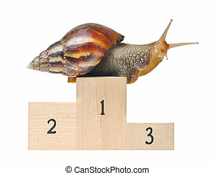 Big snail on podium isolated on white background