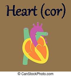 human organ icon in flat style heart