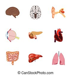 icons set in flat style human organs
