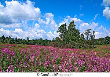 mauve flowerses on field