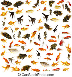 Fish collection. 5000 x 5000 pixels. - Fish collection with...