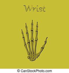 human organ icon in flat style wrist bone