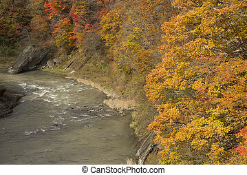 Autumn forest and river - Autumn orange forest beside Yubari...