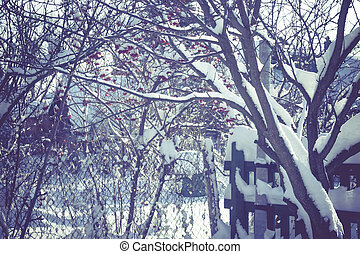 Trees in Winter Filtered - Snowy leafless trees in winter...