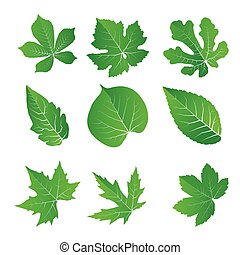 Green leaves set, vector