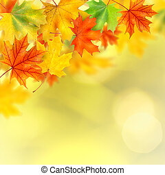 backround with autumn leaves - background with autumn leaves...