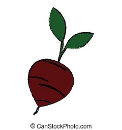 beetroot vegetable icon over white background. vector...