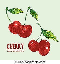 Digital vector detailed color cherry hand drawn