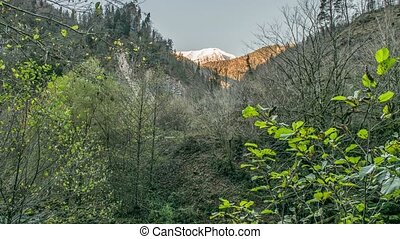 Abkhazia Caucasus Mountains - Trees in the forest, mountain...