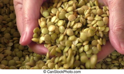 Closeup of soaked soft lentil with selective focus