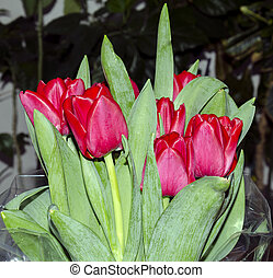 Bouquet of red tulips - A bouquet with red tulip flowers...